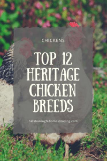 top 12 heritage chicken breeds