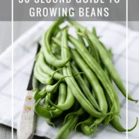 30 Second Guide to Growing Beans
