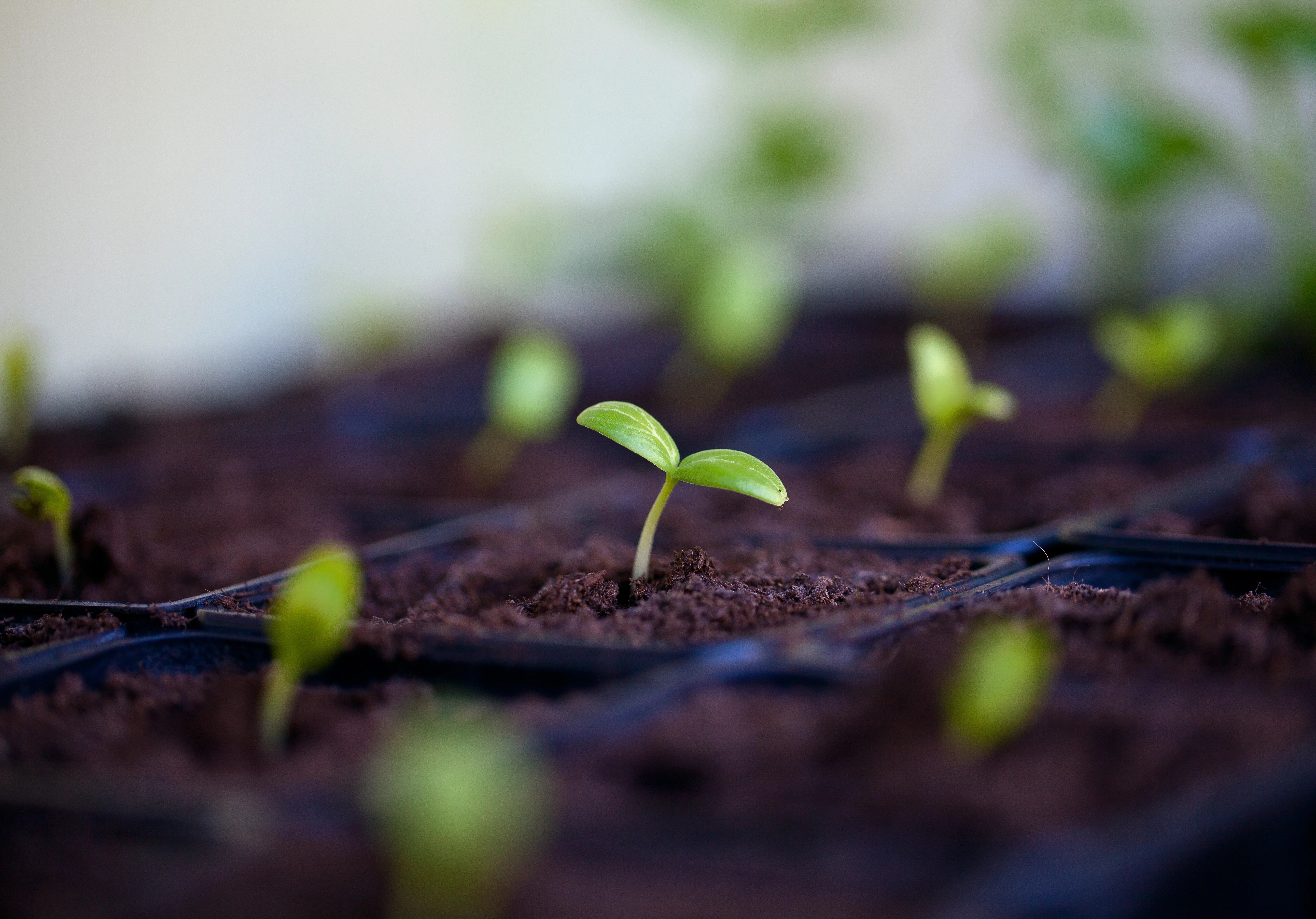 How To Test Old Seeds