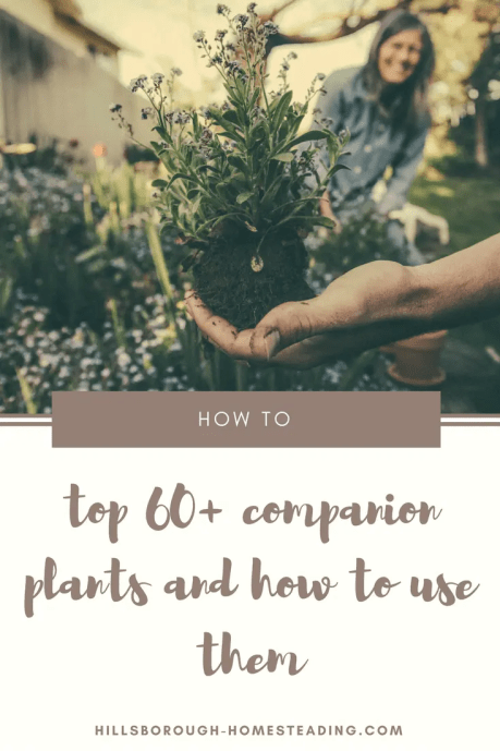 companion plants and how to use them guide