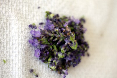 Medicinal uses of lavender