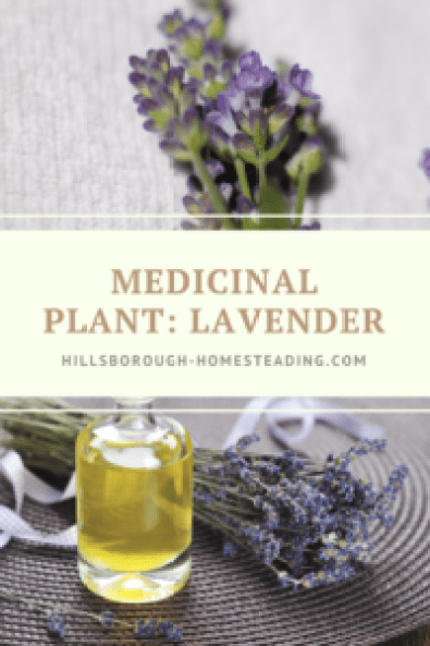 how to use medicinal lavender