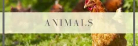 animals on the homestead