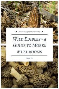 wild edibles foraging morels mushrooms