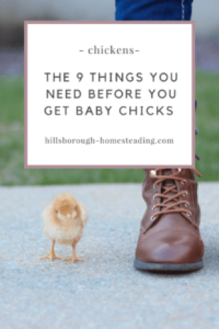 the equipment you need before you get baby chicks