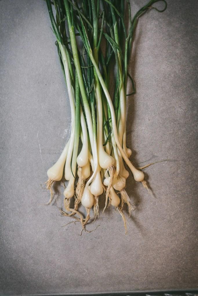 wild edible - foraged wild garlic, field garlic