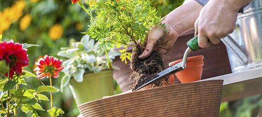 Hilltop Gardening Rocky Mountain Garden Center