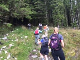 trail_woods