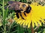 Bee v1