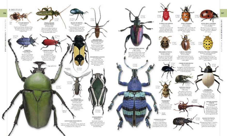 Natural History : The Ultimate Visual Guide to Everything on Earth