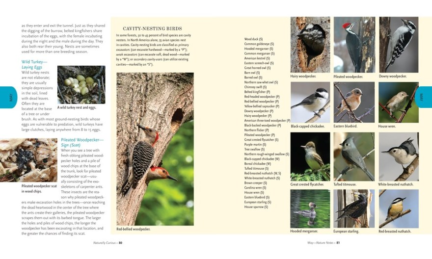 Naturally Curious : A Photographic Field Guide and Month-By-Month Journey Through the Fields, Woods, and Marshes of New England