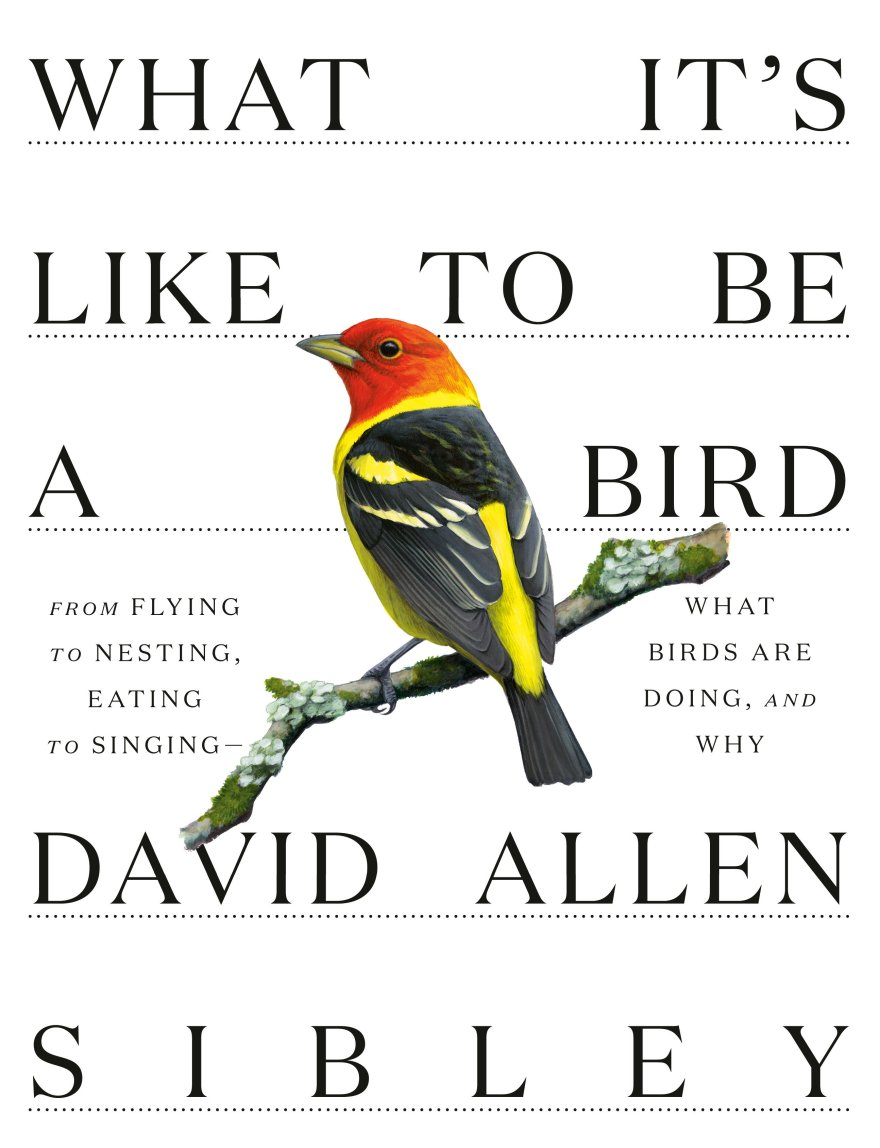 """Book Cover: """" What It's Like to Be a Bird : From Flying to Nesting, Eating to Singing--What Birds Are Doing, and Why,"""" by David Allen Sibley"""