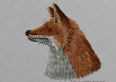 Silk Shaded fox