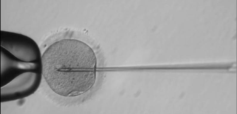 EU modifica ADN de embriones humanos