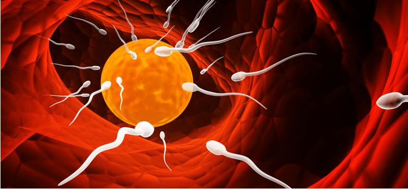 El hombre en peligro de extinción por baja calidad del esperma