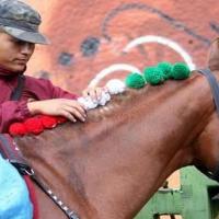 Sacan a la venta 52 caballos del Estado Mayor Presidencial