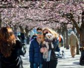 Suecia apuesta a contener la epidemia, protegiendo la economía