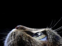 close-up-cat-eye