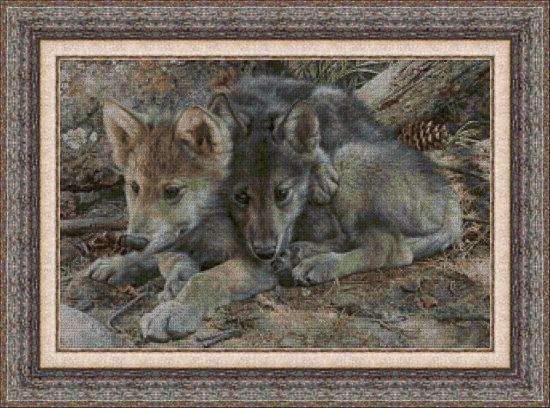 Animales 0099