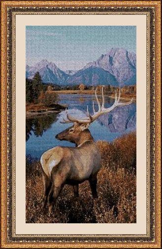 Animales 1738 1