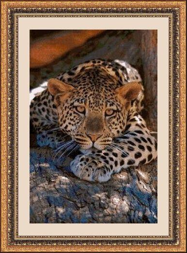 Animales 540 1