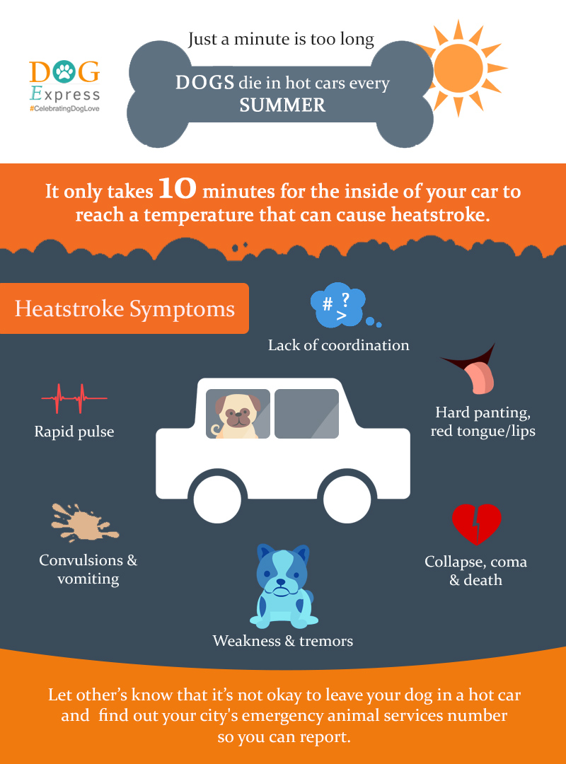 DOG-IN-HOT-CARS-INFOGRAPHIC