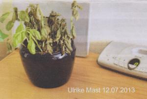 Pflanze ohne Pyramide als WLAN-Strahlenschutz