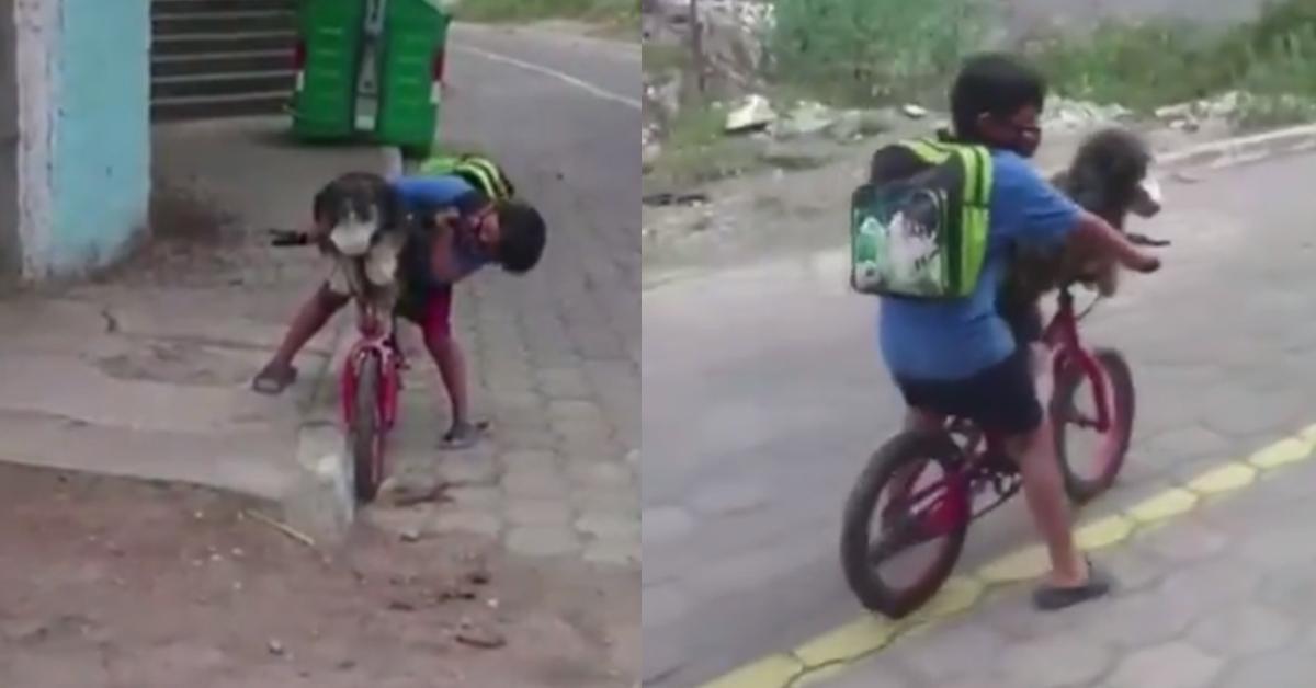 बालकले कुकुरलाई मास्क लगाइदिएको भिडियो भाइरल [भिडियोसहित]