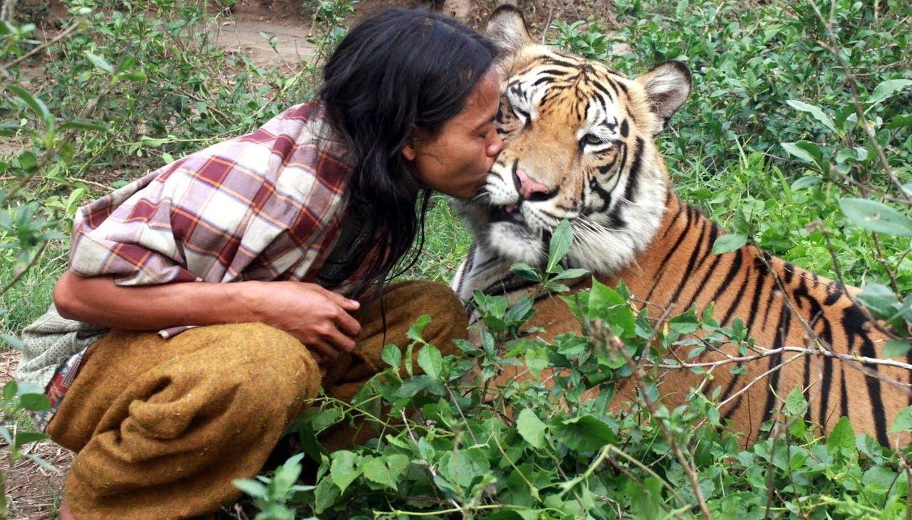 आज विश्व बाघ दिवस मनाइँदै…