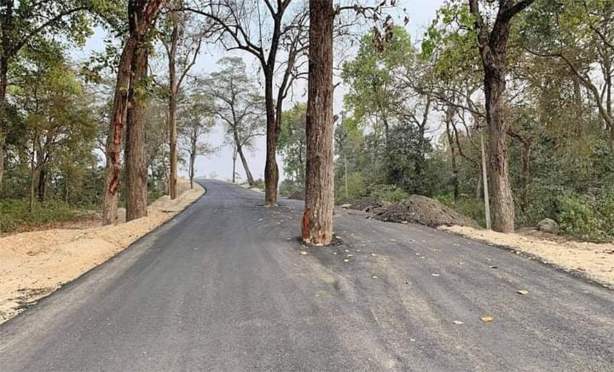 हुलाकी राजमार्गको दुर्दशा : बीच सडकमा रुख राखेर कालोपत्रे
