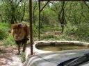 Sher Safari 7