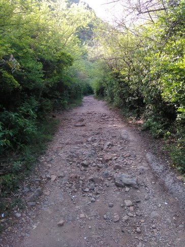 Deep into Trail-5