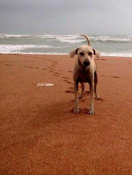 A Dog by Tayyab