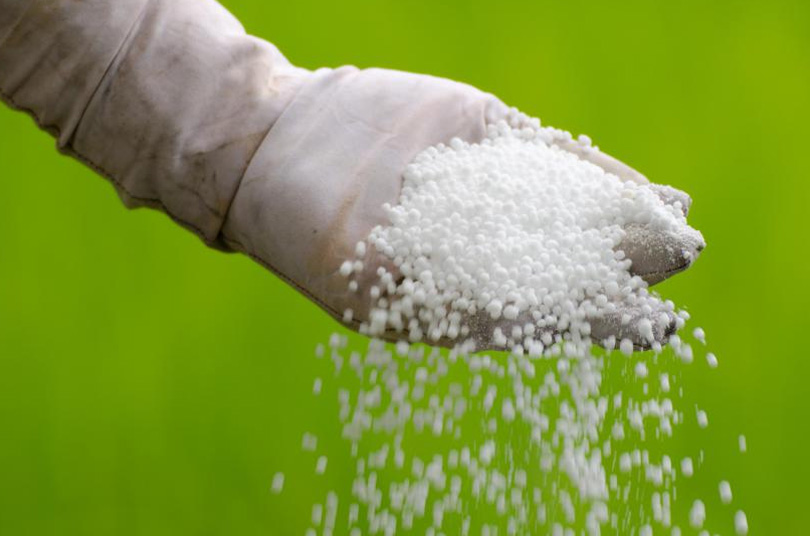 Farmers have to wait for one and a half months to get the required quantity of chemical fertilizer