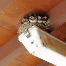 もう、巣から体が出てる…笑