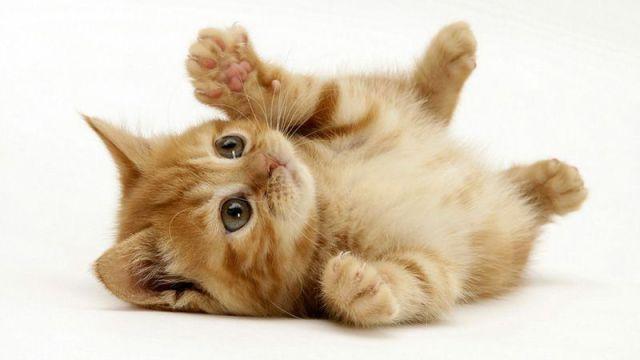 """""""Спасете котката!"""" – книга за маркетолози или сценаристи?"""