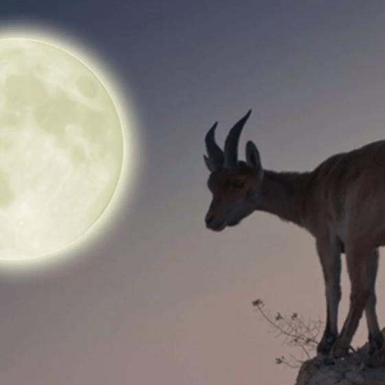 Луна в десятом доме