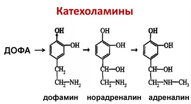 Катехоламины формула