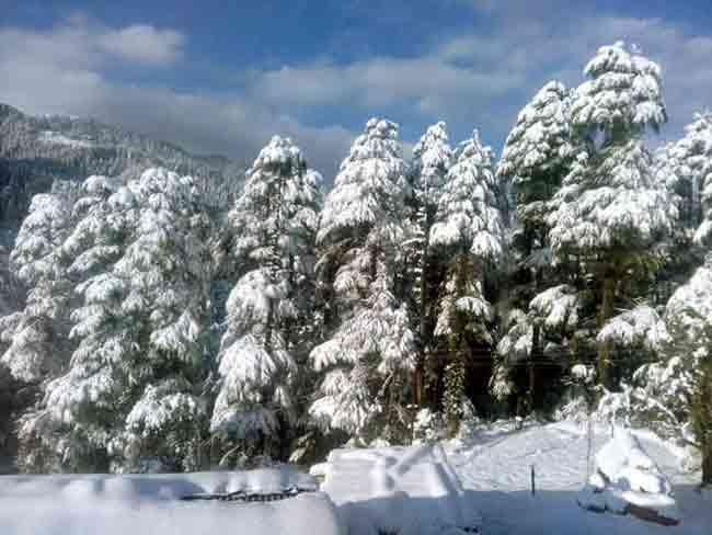 fresh-snow-in-shimla-and-manali