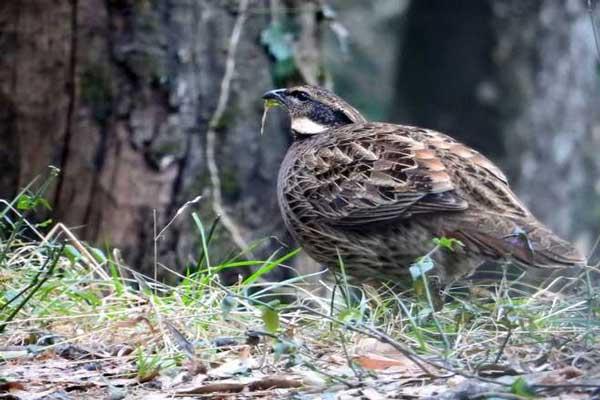 564-bird-species-found-in-state