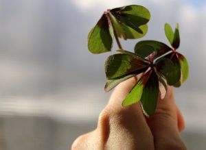 green leaves on persons hand
