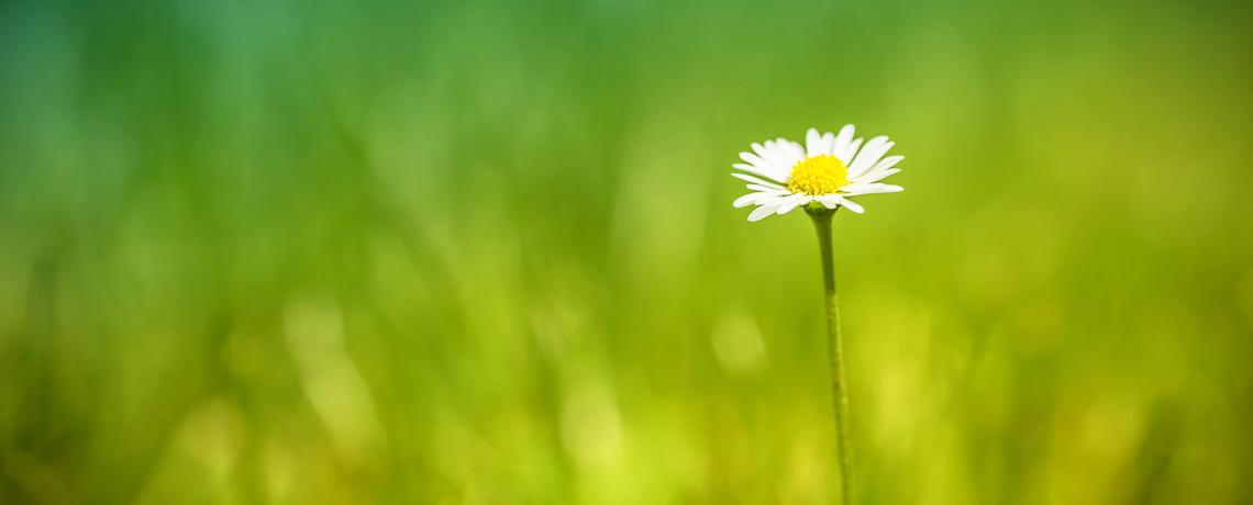 Newly growing flower in fieldd