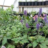 Plant Nurseries at Beaver Meadow Garden Center