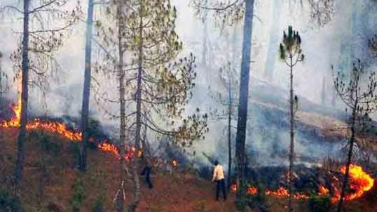 fire in uttrakhand forest | पहाड़ में आग की लपटों में धधक रहे हैं 100 से ज्यादा जंगल, छुट्टियां बना रहे हैं वन विभाग के अफसर | Hindi News, यूपी एवं उत्तराखंड