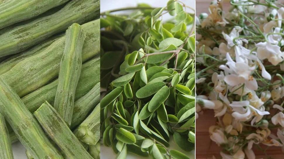 मल्टीविटामिन से भरी है सहजन की सब्जी, Drumstick की पत्ती-छाल और फूल के भी हैं अमेजिंग फायदे