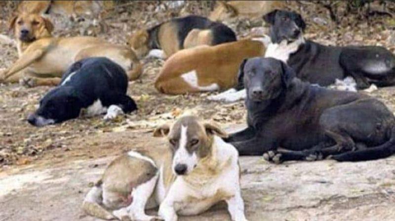Odisha: Woman kills 6 dogs by poisoning, Maneka Gandhi demands action, FIR registered