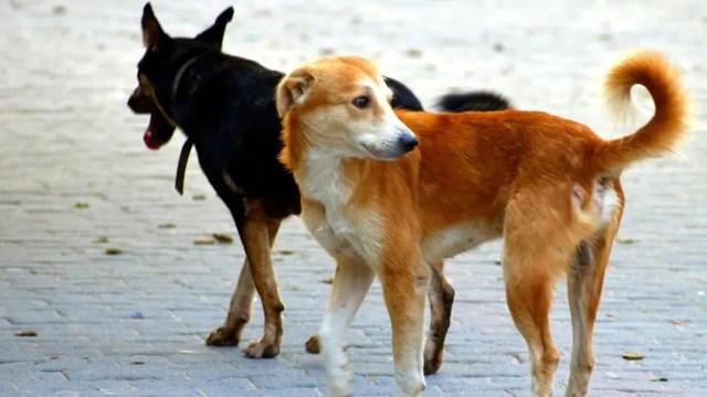 हालात से खूंखार बनता है कुत्ता, यह मिथ है कि गली के कुत्ते खतरनाक होते हैं: कोर्ट