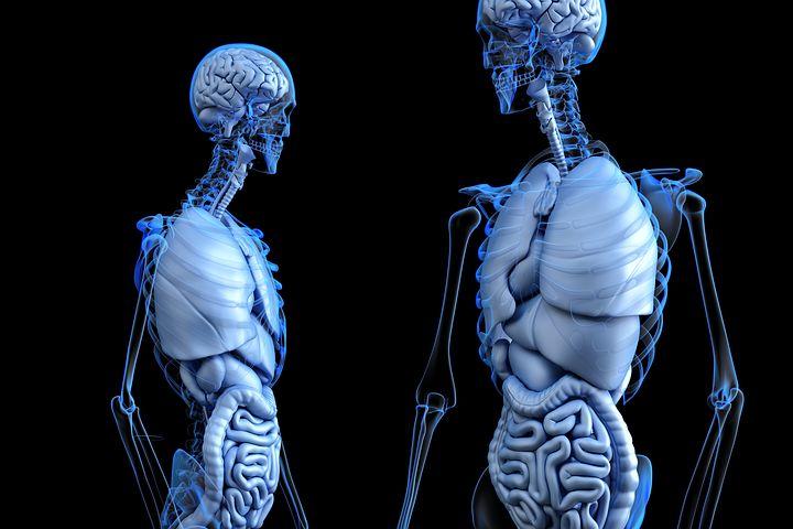Interesting Facts About Human Body in Hindi | मानव शरीर के बारे में रोचक तथ्य और जानकारी