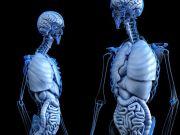 मानव शरीर के बारे में रोचक तथ्य और जानकारी 