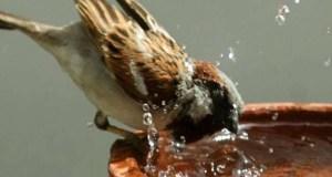 World Sparrow Day विश्व गौरैया दिवस